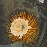 Botanical Artworks at Bonhams Old Master Decorative and Modern Prints Auction