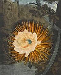 flower-print.jpg