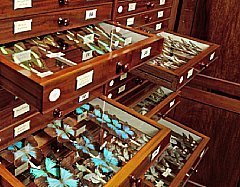 butterfly-collection.jpg