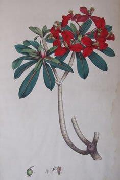 plant-book.jpg