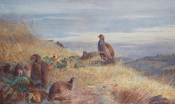 Archibald Thorburn Painting for Auction