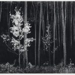 Christie's New York Announce Two Photograph Sales