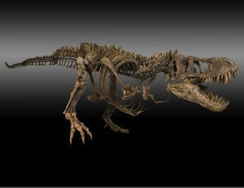 T-Rex Triceratops and Montana Dueling Dinosaurs for Bonhams auction