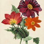 Dreweatts & Bloomsbury Auctions Bibliophile Sale