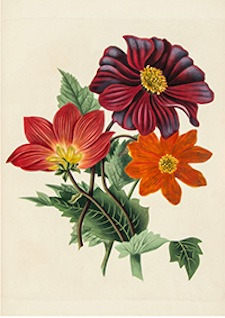 Studies of Flowers from Nature (1818) by Miss J. Smith
