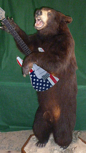 Full standing black bear taxidermy