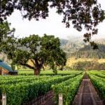 Hart Davis Hart Wine Co.'s Annual Auction Sales Total $66.3 Million